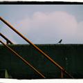 写真: Alone Bird Standing