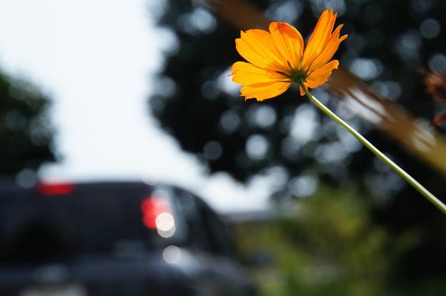Photos: 道端はそろそろ秋の花