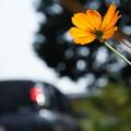 道端はそろそろ秋の花