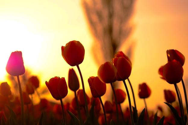Photos: 春のたそがれ