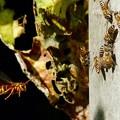 昆虫類 (155)