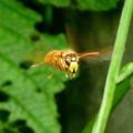 昆虫類 (159)