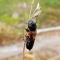 Photos: 昆虫類 (169)