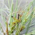 Photos: 昆虫類 (175)