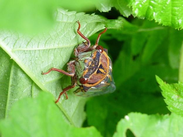Photos: 昆虫類 (185)