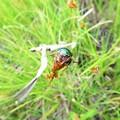 Photos: 昆虫類 (188)