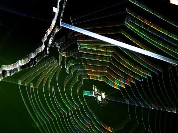 蜘蛛の巣 (1)