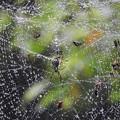 写真: 蜘蛛 (3)