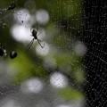 写真: 蜘蛛 (4)