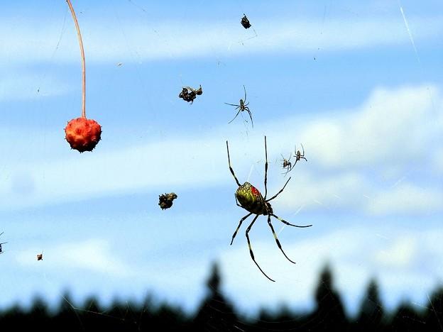 クモ (1)