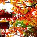 写真: 金刀比羅神社?