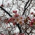 写真: 開花(2)