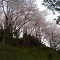 男山八幡公園(3)