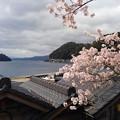 桜咲く伊根浦(3)
