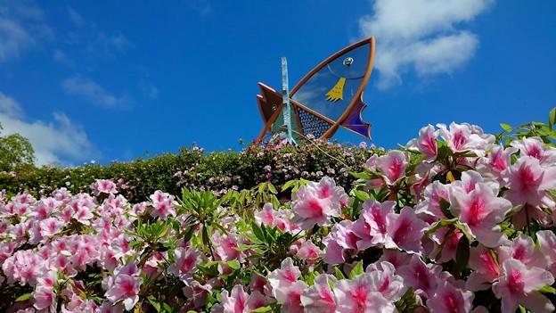 ツツジ咲く舟屋の里公園(5)