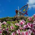 写真: ツツジ咲く舟屋の里公園(5)