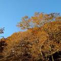 大江山・紅葉(3)