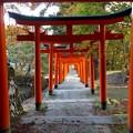 写真: 有子山稲荷神社(4)