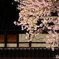 夜桜ライトアップ(満開)3