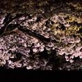 夜桜ライトアップ(満開)4