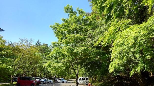 新緑が眩しい六甲山(1)