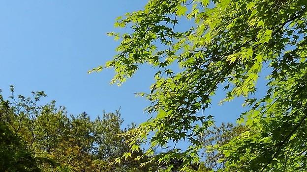 新緑が眩しい六甲山(2)