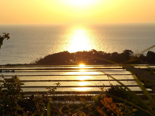 朝陽を浴びて黄金色に輝く棚田(1)