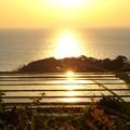 Photos: 朝陽を浴びて黄金色に輝く棚田(1)