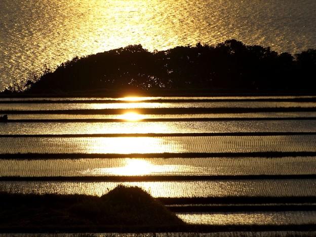 朝陽を浴びて黄金色に輝く棚田(3)