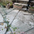 グリーンカーテン破壊されました。