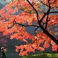 小石川後楽園にて