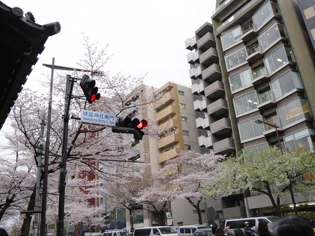 Photos: 2019年 桜1