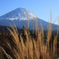 写真: 富士山 癒しの里根場 171203 02