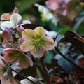 写真: 武蔵丘陵森林公園 180314 08