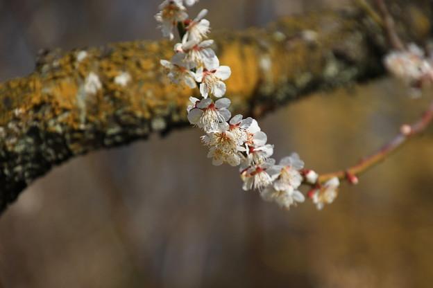 武蔵丘陵森林公園 180314 11