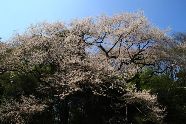 北本自然観察公園 180328 01