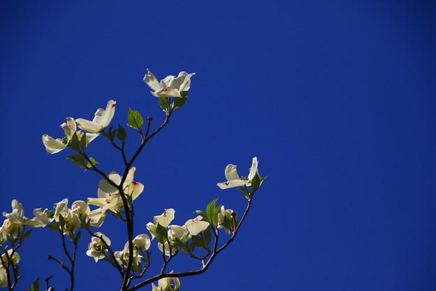 我がマンションの花々180408 03