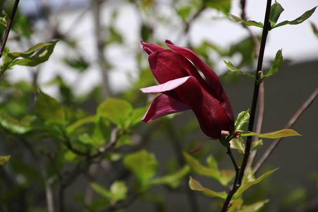 我がマンションの花々 180408 07