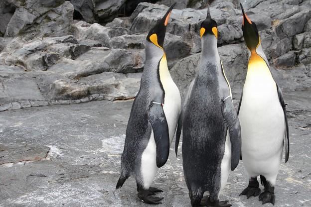 旭山動物園 130512 06