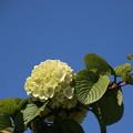 写真: 鴻巣 花のオアシス 170423 05