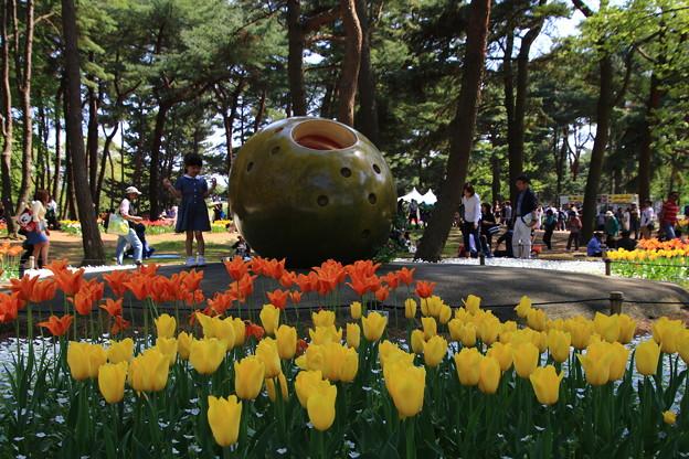 写真: 茨城 ひたち海浜公園 180421 09