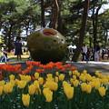 Photos: 茨城 ひたち海浜公園 180421 09