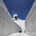 写真: 雪の回廊 180514 06