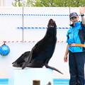 写真: のとじま水族館 180517 02