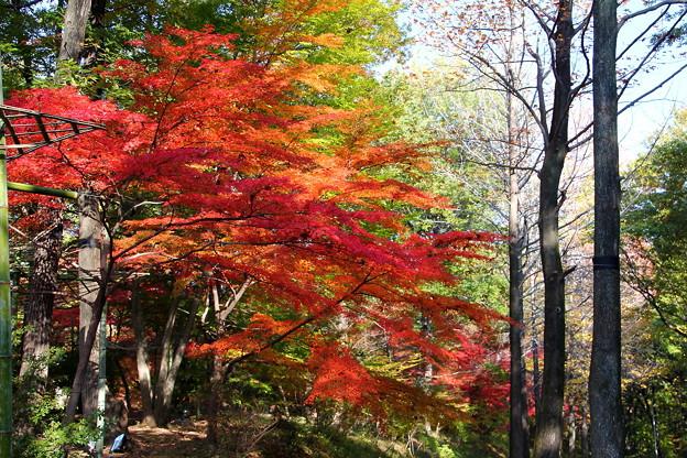 武蔵丘陵森林公園 秋 131118 01