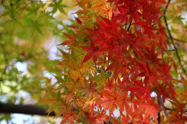 武蔵丘陵森林公園 秋 131118 02
