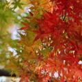 写真: 武蔵丘陵森林公園 秋 131118 02