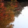 写真: 武蔵丘陵森林公園 秋 131118 05