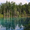 Photos: 午後の青い池 180727 02