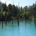 Photos: 朝の青い池 180728 01